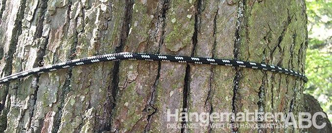 Microrope envuelto alrededor del tronco de un árbol